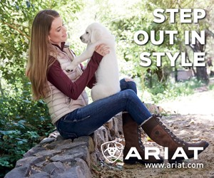 Ariat B (Gloiucestershire Horse)