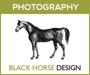 Black Horse Design Photography (Gloucestershire Horse)