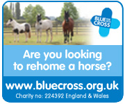 Blue Cross Burford (Gloucestershire Horse)