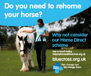 Blue Cross 2020 A (Gloucestershire Horse)
